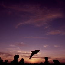 A dolphin shaped balloon in the sky during the carnival parade in Veracruz, Mexico